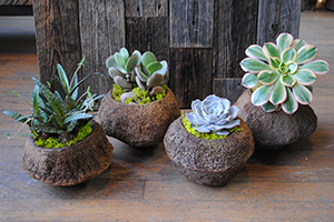 plants in stone planters